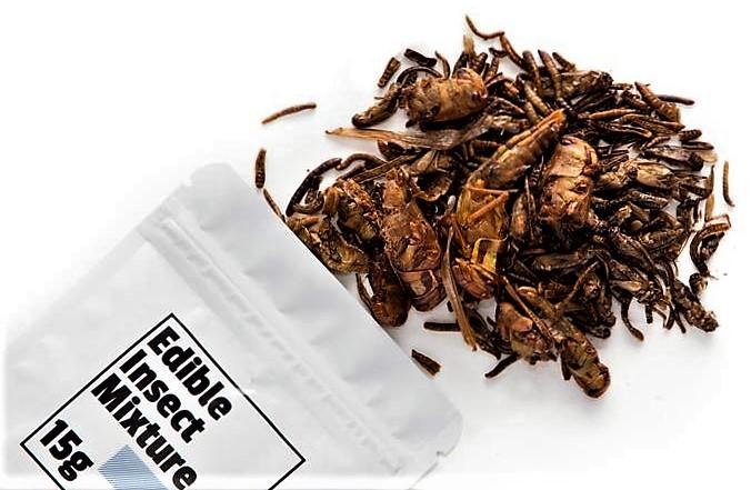 Insecten: Waarom eten we ze niet gewoon?